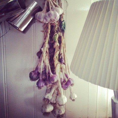 home grown garlic plaits drying